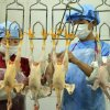 China has identified five more cases of avian influenza