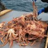 The captain of the vessel could face up to seven years in prison for smuggling crab