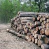 Entrepreneurs from China were seized illegally harvested timber in Primorye