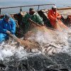 In Primorye, imposing restrictions on the recreational and sport fishing