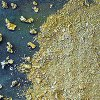 In Primorye, seized 107 illegal gold bullion